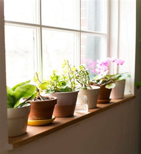Sill Plants by How To Create Privacy In The Home