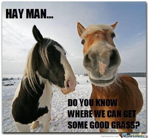 Hay Meme - horse memes hay is for horses by jsceb meme center horses silly pinterest horse meme