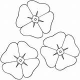 Poppy Coloring Pages Printable Template Flowers Sheets Flower Poppies Remembrance Colouring Bigactivities Sheet Activities Google Copyright Drawing Many Adult Printables sketch template