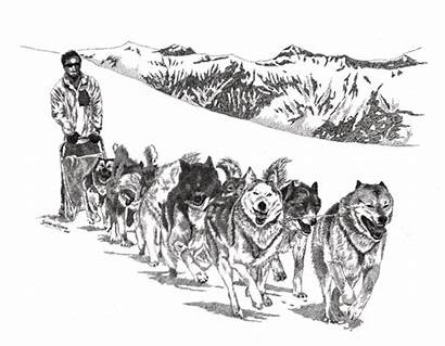 Sled Drawings Dog Drawing Coloring Dogs Switzerland