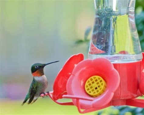 homemade hummingbird food recipes thriftyfun