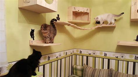 diy katzen kletterwand katzenblogde interessantes