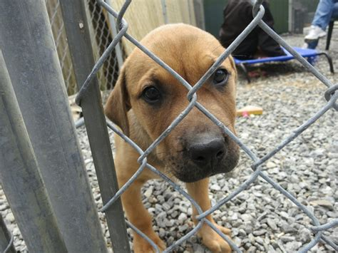 Adopt A Dog Ten Healthy Happy Puppies Need Homes Greenwich Free Press