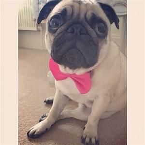 Why Can39t I Go To Bed In My Bow Tie Says Mabel I Feel