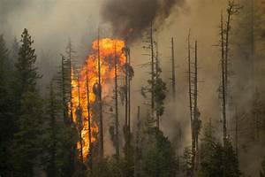 Firefighting Costs Burn Hole In Washington State Budget ...