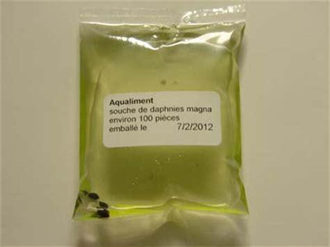 souche de daphnies magna vivantes 233 levage et reproduction en aquarium