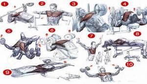 Top 5 Best Chest Exercises - all-bodybuilding com