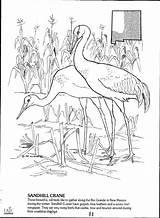 Coloring Mexico Wildlife Eric Borrowers Animals Borrow Streaming Artikel sketch template