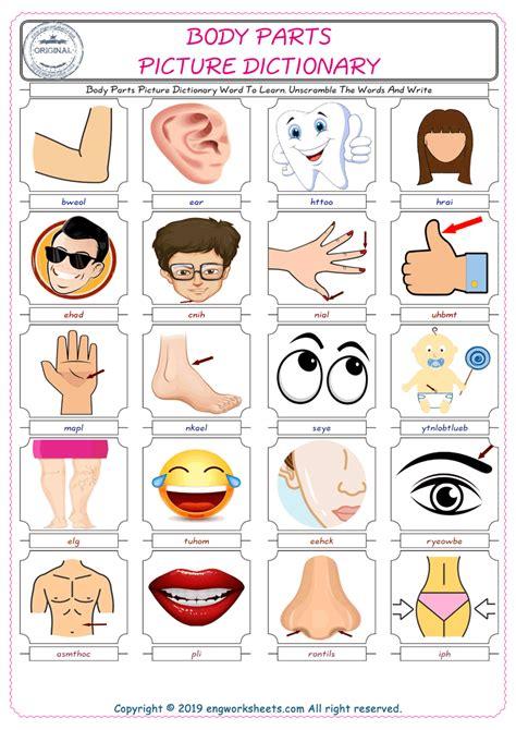 body parts esl printable english vocabulary worksheets