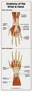 Lower Leg Muscle Diagram Blank