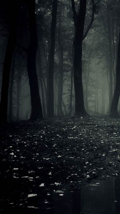 Dark Forest Phone Mobile Wallpapers Phones Ultra