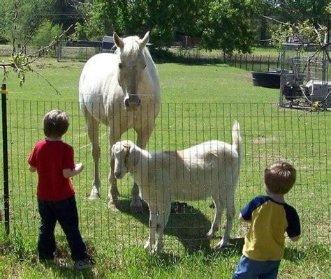horse goat horses companions goats ihearthorses