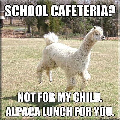 School Lunch Meme - alpaca lunch meme memes