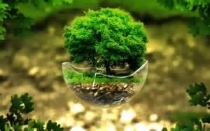 bonsai tree wallpaper for desktop pixelstalk net