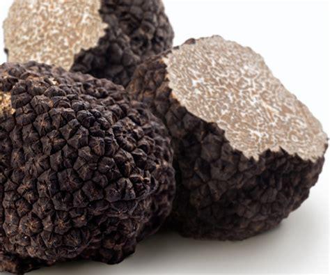 comment cuisiner les truffes noires choisir la truffe choisir conserver et cuisiner la
