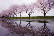 Spring Rain Landscape Photography