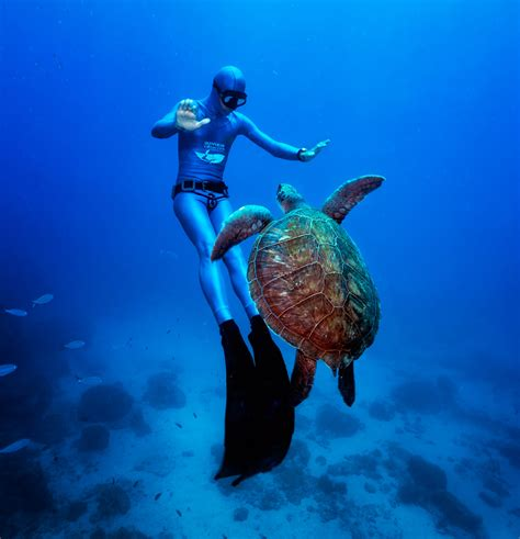 scuba dive  fish   british virgin islands