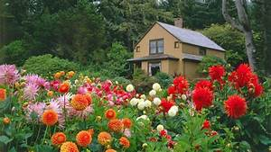 Garden Flower With House