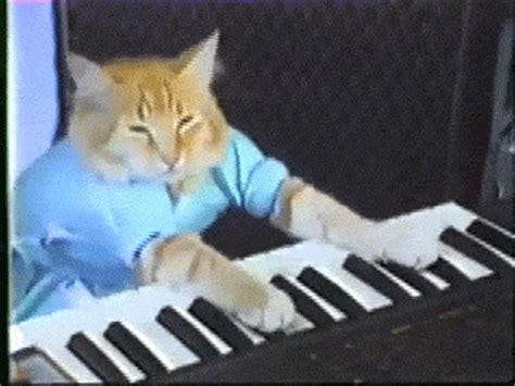 Cat Playing Piano Meme - cat playing piano