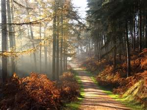 Image result for cannock chase images