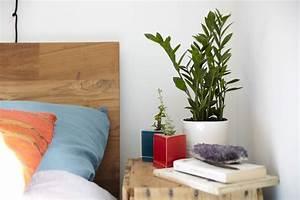 Should You Keep Plants in Your Bedroom? - Casper Blog
