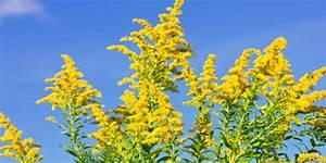 Steuerfaktor Berechnen : allergie katalysator ambrosia ~ Themetempest.com Abrechnung