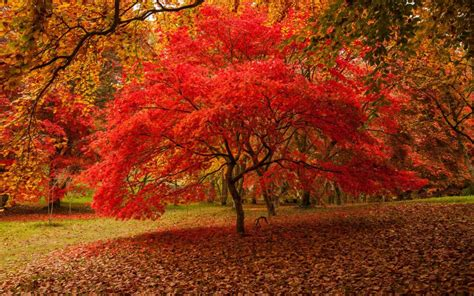 favourite places  leaf peeping  britain