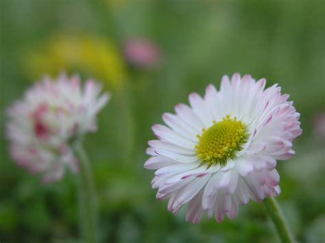 Filesmall Flowerjpg  Wikimedia Commons
