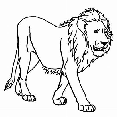 Lion Simple Coloring Animals Pages Adult Nature