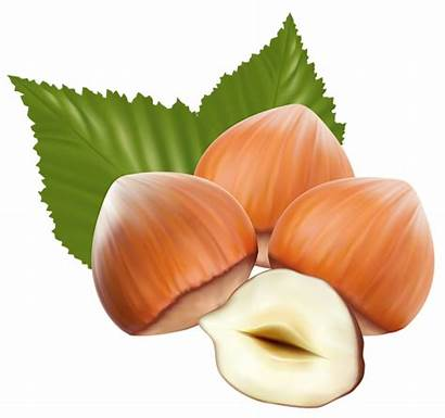 Clipart Hazelnuts Nuts Yopriceville Transparent Previous