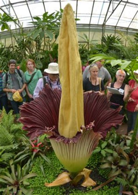 Corpse Flower Botanic Gardens by Corpse Flower Blooms