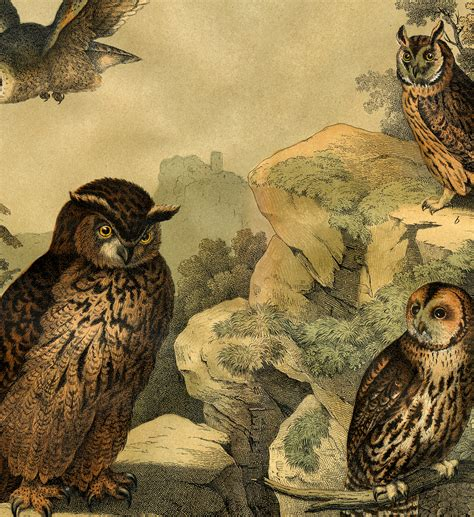 Wonderful Natural History Owls Print! - The Graphics Fairy