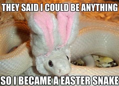 Funny Snake Memes - funny easter snake meme jokes 2014