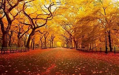 Fall Street Leaves Landscape Wallpapers Desktop Backgrounds