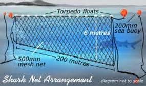 shark nets science features abc science