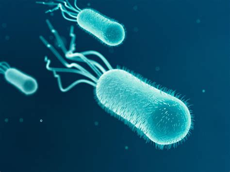 Helpful Bacteria Examples