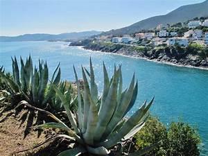 Mediterrane Pflanzen Liste : mittelmeerpflanzen mediterrane pflanzen kaufen ~ Watch28wear.com Haus und Dekorationen