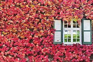Rankpflanzen Winterhart Immergrün : liveinternet ~ A.2002-acura-tl-radio.info Haus und Dekorationen