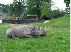Chester Zoo Picture of Chester Zoo, Chester TripAdvisor