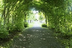 Arbres A Pousse Tres Rapide : arbres pour haie liste ooreka ~ Premium-room.com Idées de Décoration