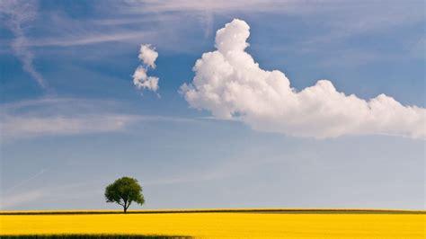 hd hintergrundbilder rapsfeld gelb bluete himmel blau