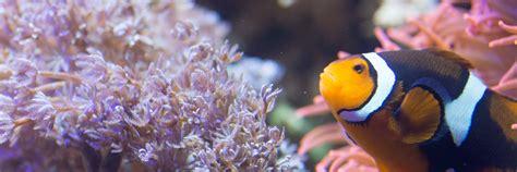 Creatures | SEA LIFE Charlotte - Concord Aquarium