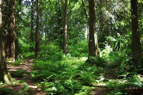 eco forest trinity western celebrates blaauw eco forest trinity western university