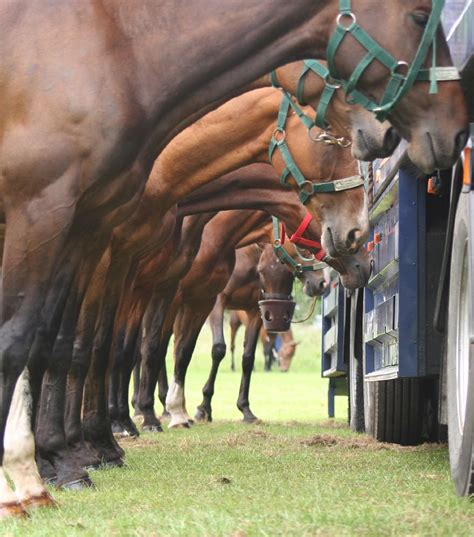 horses horse polo ponies equestrian equine animals pretty unique perspective animais pony bitch odwied string linda uploaded