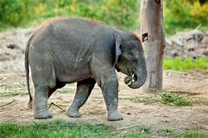 Save A Creature: Baby Indian Elephants