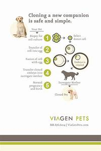 Genetic Preservation And Pet Cloning Services For