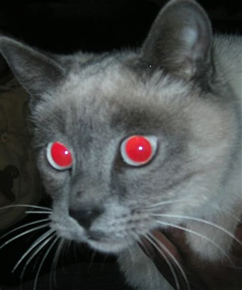 zo voorkom je rode ogen op de vision ooglaseren