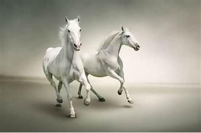 Horse Wallpapers Horses Running Painting Canvas Whitehorse