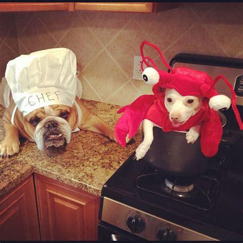 chien cuisine chien cuisine autre chien soocurious