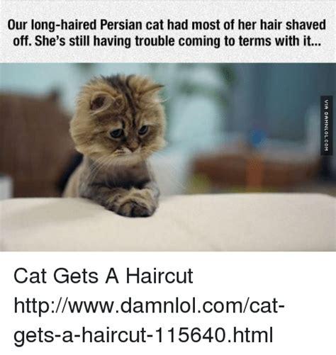 Persian Cat Meme - cat haircut meme haircuts models ideas